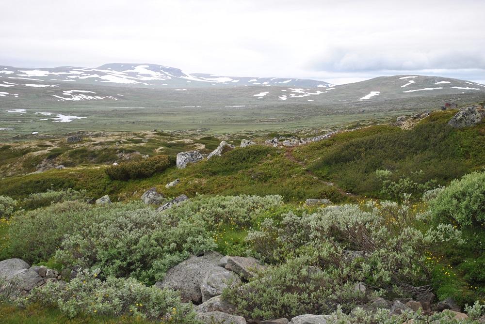 Die karge und weite Tundralandschaft der Hardanger Vidda