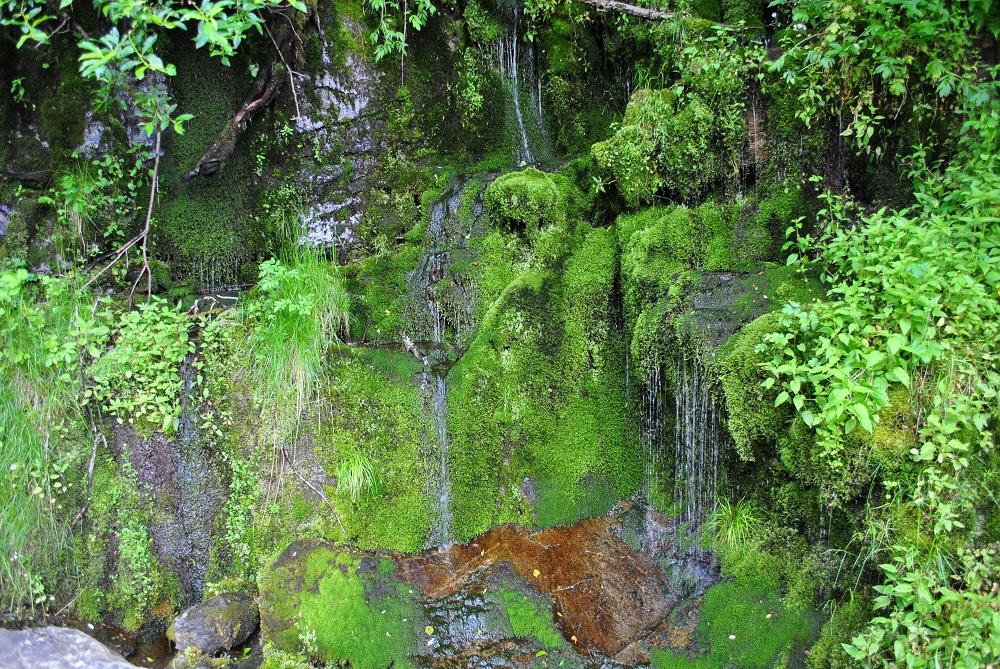 Üppige Vegetation am Wegesrand