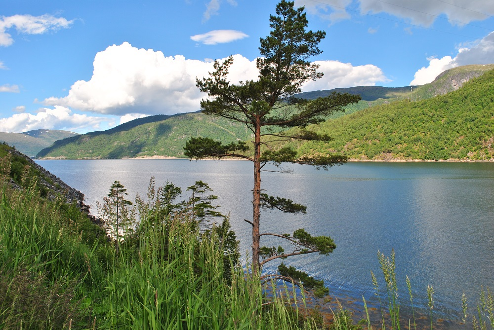 Am Vinjefjord