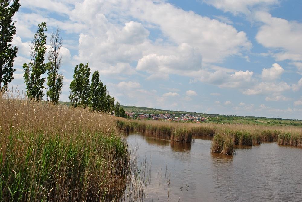 Der Neusiedlersee in Richtung Rust